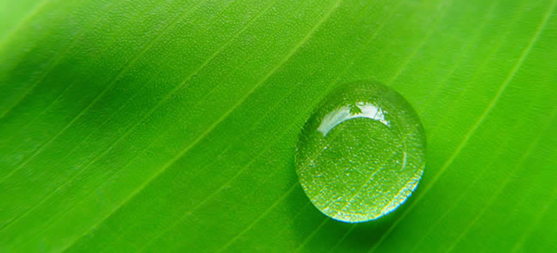 Il bioetanolo